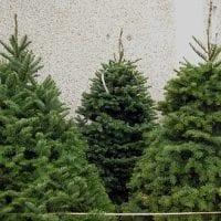 Christmastreesrevised2-o30VkT.jpg